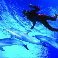 Experience the magic of life under the water and join Bulter's Swim with Dolphins for an up close and personal encounter with the incredible...