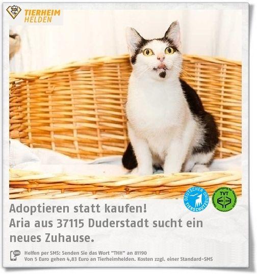 Aria kam trächtig ins Tierheim Duderstadt und hat dort auch ihre Babies bekommen, http://www.tierheimhelden.de/katze/tierheim-duderstadt/ekh/aria/12856-1/  Aria braucht noch etwas Zeit zum warm werden, doch mit viel Geduld und Liebe wird sich das sicher legen.