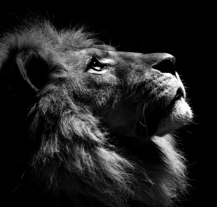 Pin By Lisa Harris On Nature Is Beautiful Lion Profile Lion Poster Animal Paintings