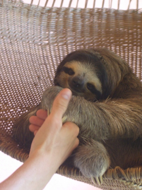 Why...hello there, Mr. Sloth. It's nice to meet you!!