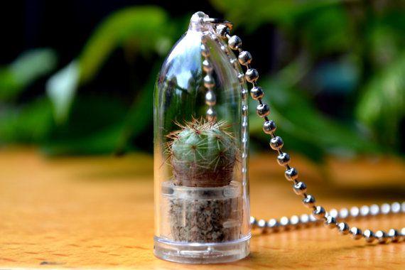 Melon Cactus Plant Live Terrarium Necklace. by WearItMiniPlants, $8.49