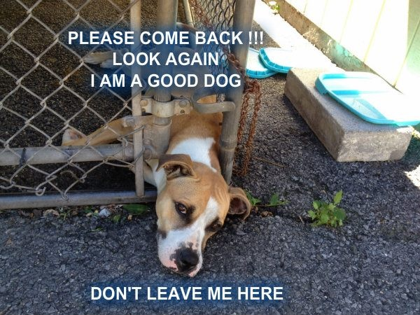 save a life...adopt!: Pet Shop, Dogs Animal, Animal Cruelty, Life Adopt, Animal Rescues, Big Dogs, Shelter Animals