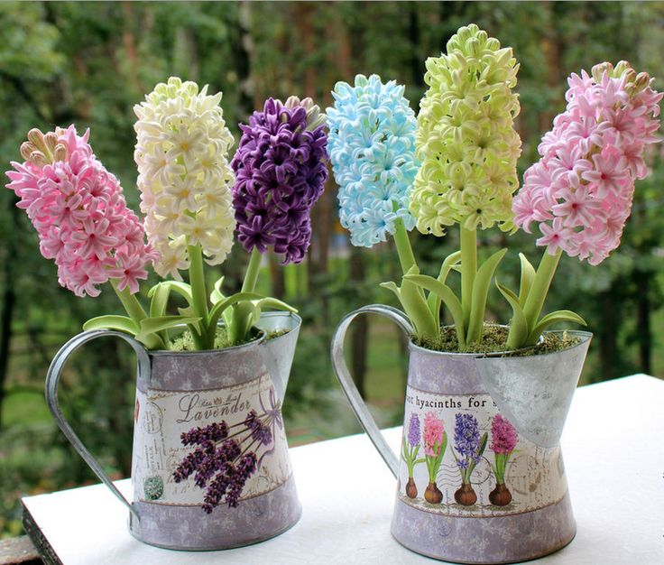 Луковичные цветы в оригинальной таре