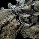 """Encuentran fósil de dinosaurio de 110 millones de años - EL DEBATE  EL DEBATE Encuentran fósil de dinosaurio de 110 millones de años EL DEBATE Canadá.- Un fósil tan bien conservado que parece una estatua se está revelando hoy en un museo canadiense. El fósil de 110 millones de años de nodosaurios, llamado """"el tanque de cuatro patas"""" fue descubierto por un minero en…"""