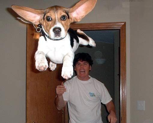 Hond de deur uit