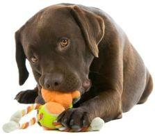 Fazer brinquedos para os animais