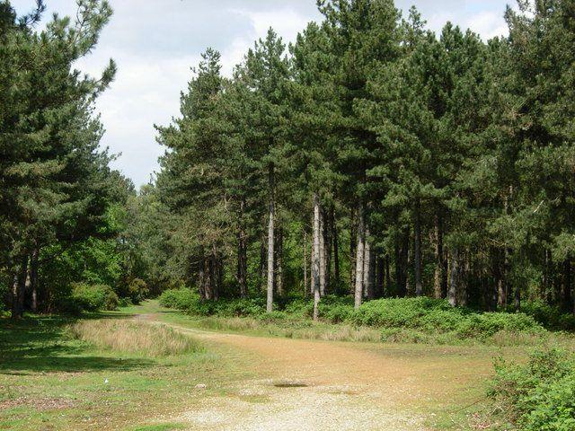 Dunwich, Forest
