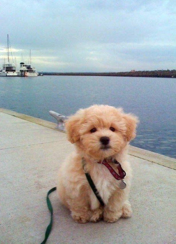 And this adventurous little floof. | 21 Fluffy Dogs Who Will Instantly Fill Your Cold Heart With Joy