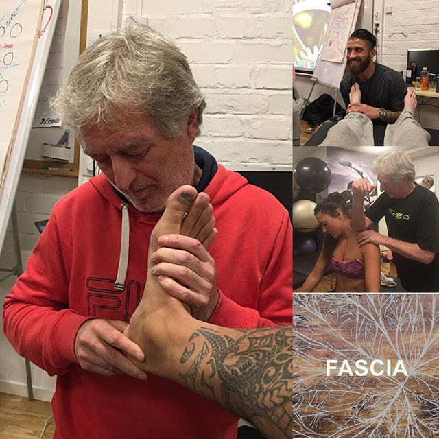 Manual soft tissue technics and facilitation with the aim to create structural symmetry, elastic proportions in the tissue, minimize muscular work and increase soft tissue work. Healthy loading induces remodeling of fascial architecture. #3dfunktion #sethronland #andreasöhgren #stockholm #fascia #renovateandsculpting #edemareduction #increasesupplyofnourishment #hydrating #jointmobilization #pt #leonardosnelleman #moveqacademyeurope #sportperformancecentrerijnmond #rotterdam