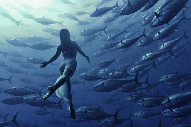 Retired Japanese Olympic synchronized swimmer Saho Harada dances inside a shoal of tuna two miles off the coast of Malta. The underwater shots were taken by Maltese photographer Kurt Arrigo