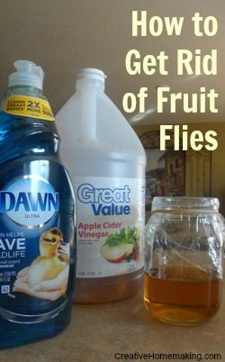 How to get rid of fruit flies with a homemade fruit fly trap.