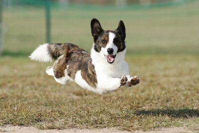 Look at this happy pup just leaping and being a good dog. Luv him!