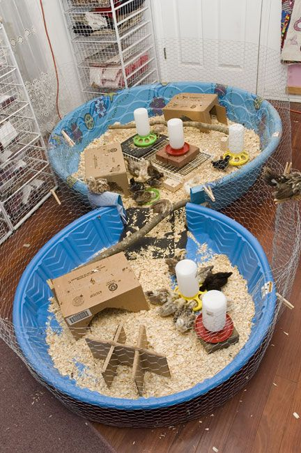 Kiddie Pool 1 And 2 For Chicks Chicken Coop Brooders