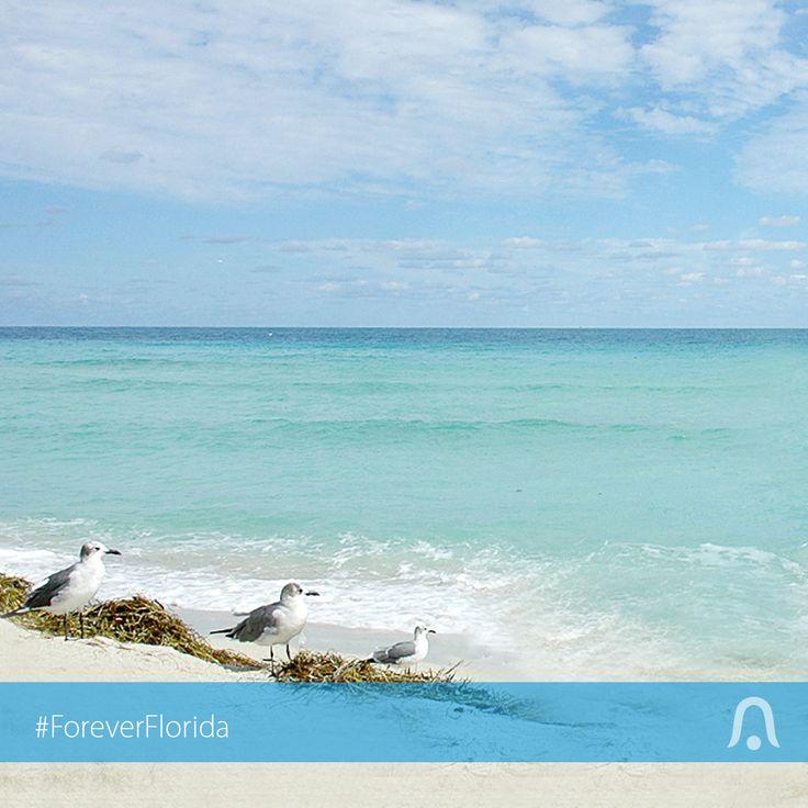 227 best florida flavor images on pinterest florida for Destin fl fishing