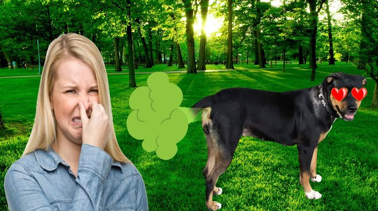Top 10  #Dogs #Love To #Farts
