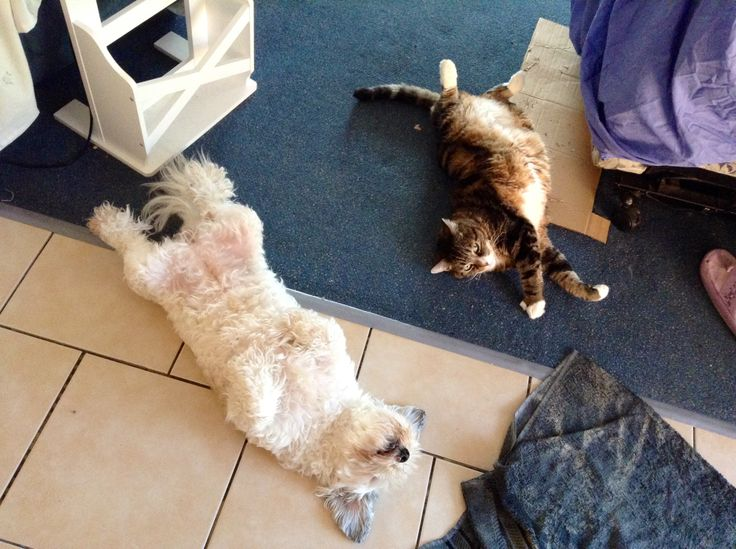 Flat out missy and toot