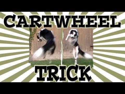 #dogs #tricks #training Train a dog to do a cartwheel.  www.pamsdogtraining.com