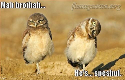 Funny Twin Quotes | Funny Owl Twin Brothers – Funny Animals – Funny Picture ...