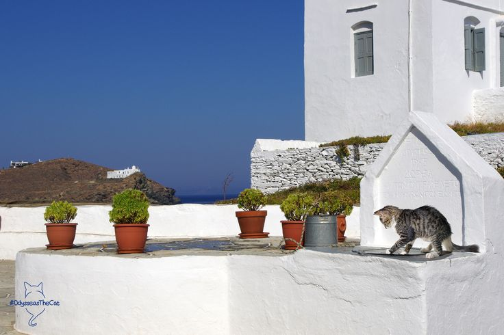 While #OdysseasTheCat was relaxing in #Chania, he overheard two travelers talk about Sifnos island!  So here he is now, in #Sifnos!