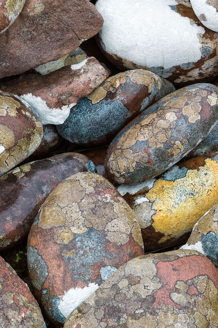 Lichen on red granite boulders, Isle of Rum, Scotland. Image taken on a Leica S (type 006) camera.