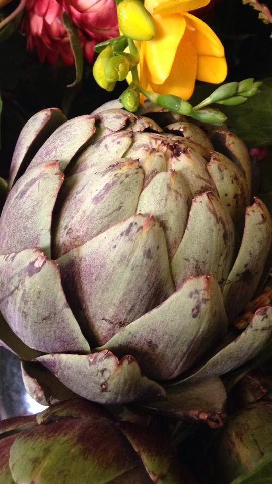 artichoke by the memo group