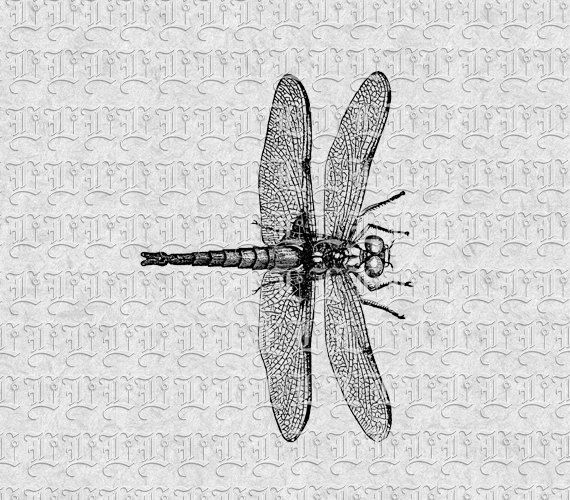 Dragonfly Vintage Clip Art Illustrations  by luminariumgraphics, $2.20