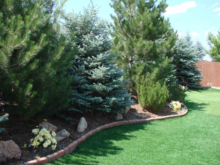 I like that there is a variety of trees, although not sure if this is the type we would use for our backyard