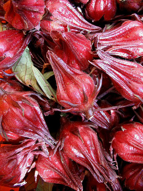 rosella berries, native Australian fruit