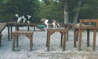 24 best dog playground images on Pinterest
