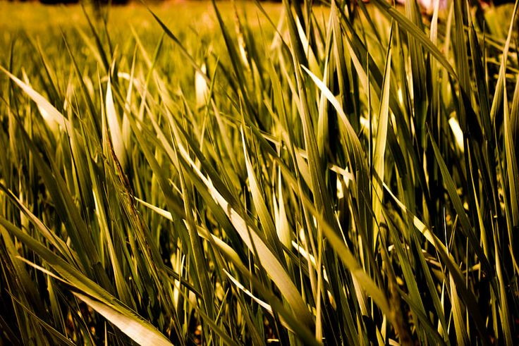 Blades of Grass (www.pointshogger.com)