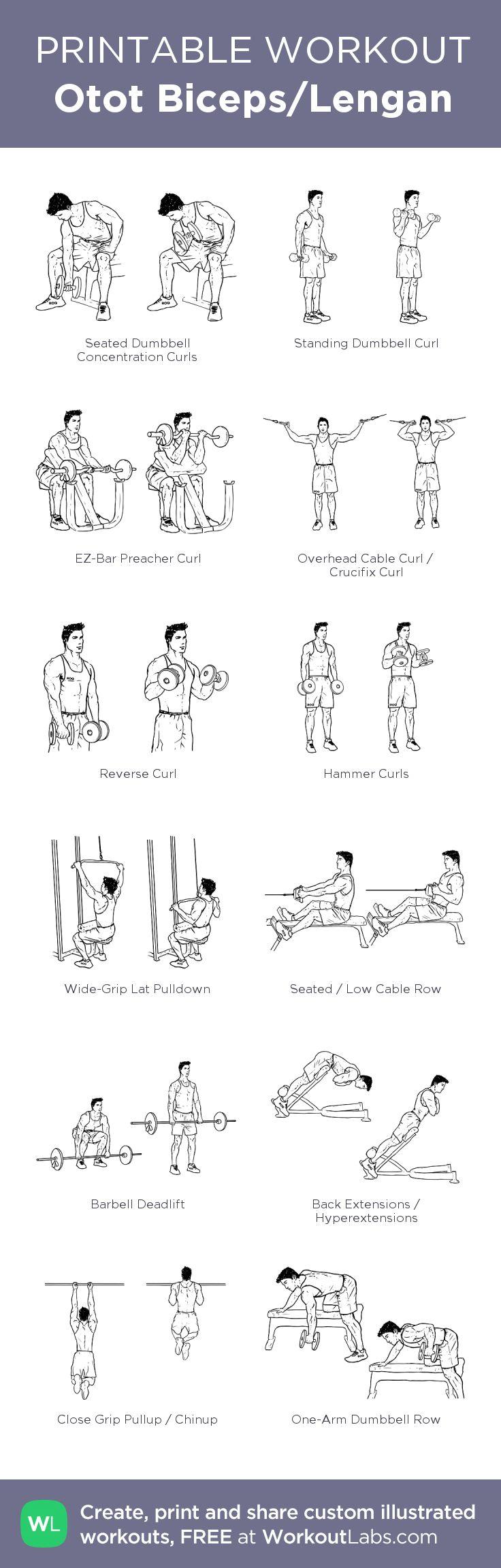 Otot Biceps/Lengan –my custom workout created at WorkoutLabs.com • Click through to download as printable PDF! #customworkout