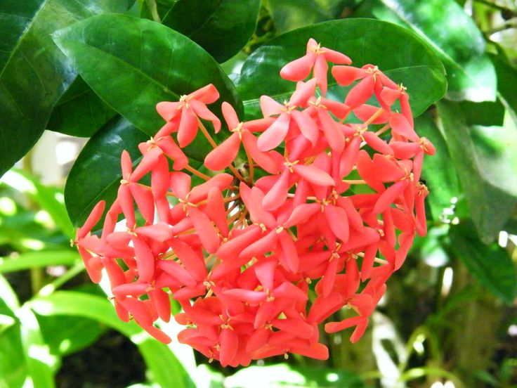 Tropical bloom holiday Port Douglas 2008