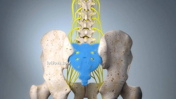 SI kĺb (SK verzia)