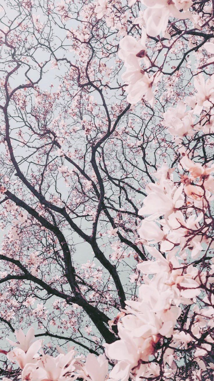 Free Phone Wallpapers February Edition Pink wallpaper