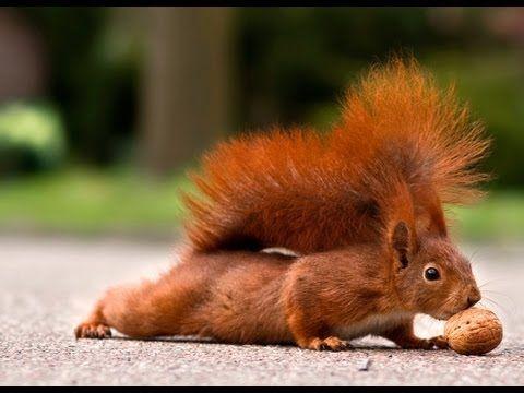 Fotografie Tipps & Tricks: Eichhörnchen & Katzen Bilder - Tiere fotografieren
