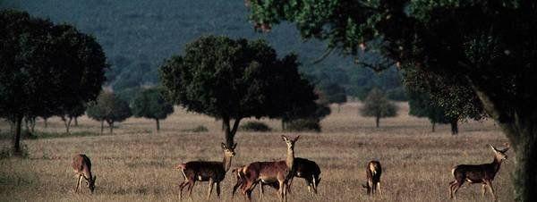 Destinos ambientales para visitar en Semana Santa o... para huir de ellos. Imagen del Parque Nacional de CabañerosGYI.