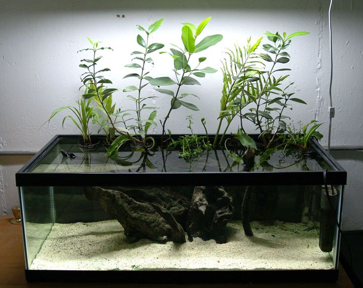 Planting the Brackish Aquarium There's a bit of a misconception that many (perhaps most) freshwater plants are intolerant of salt and can't be used in brackish or marine aquariums. This is somewhat exacerbated by the fact that few marine plants are...
