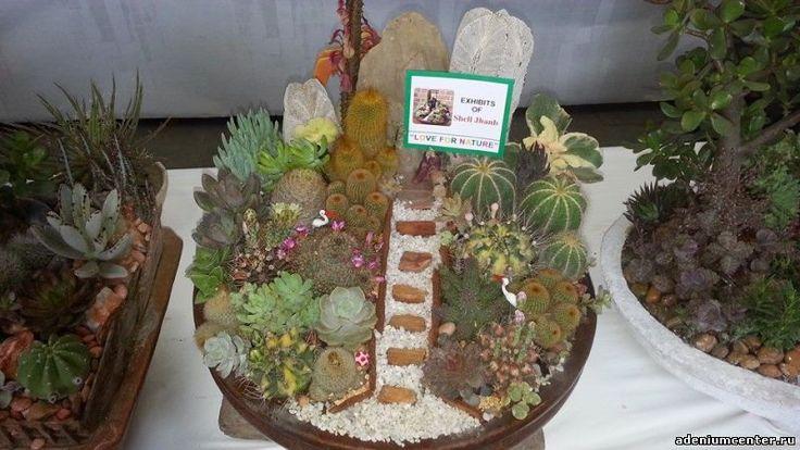 Выставка экзотических растений и суккулентов в Дели, Индия - Форумы