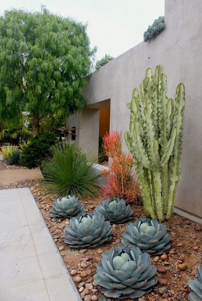 California dreaming again -- succulents, gravel, stucco wall