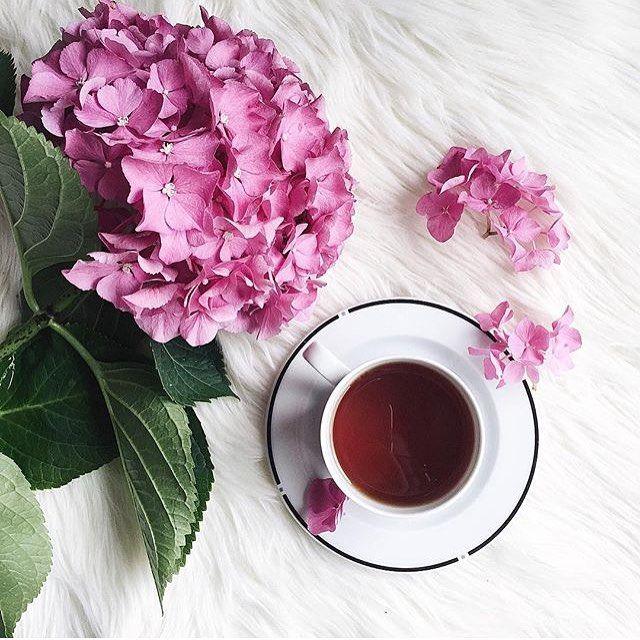 Bom dia! Uma semana de muita paz para todos nós!  #bomdia #boasemana #flores…