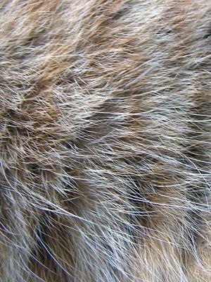 Как освежить волосяной покров меховых изделий