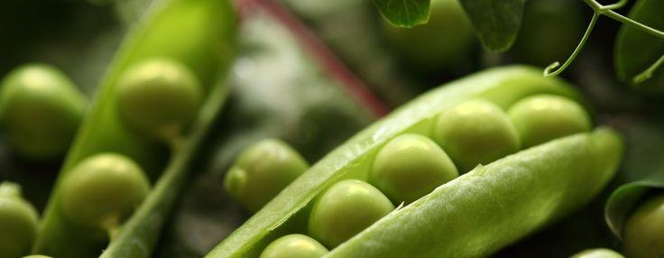 Jeste li znali? Zeleni grašak – povrće kraljeva