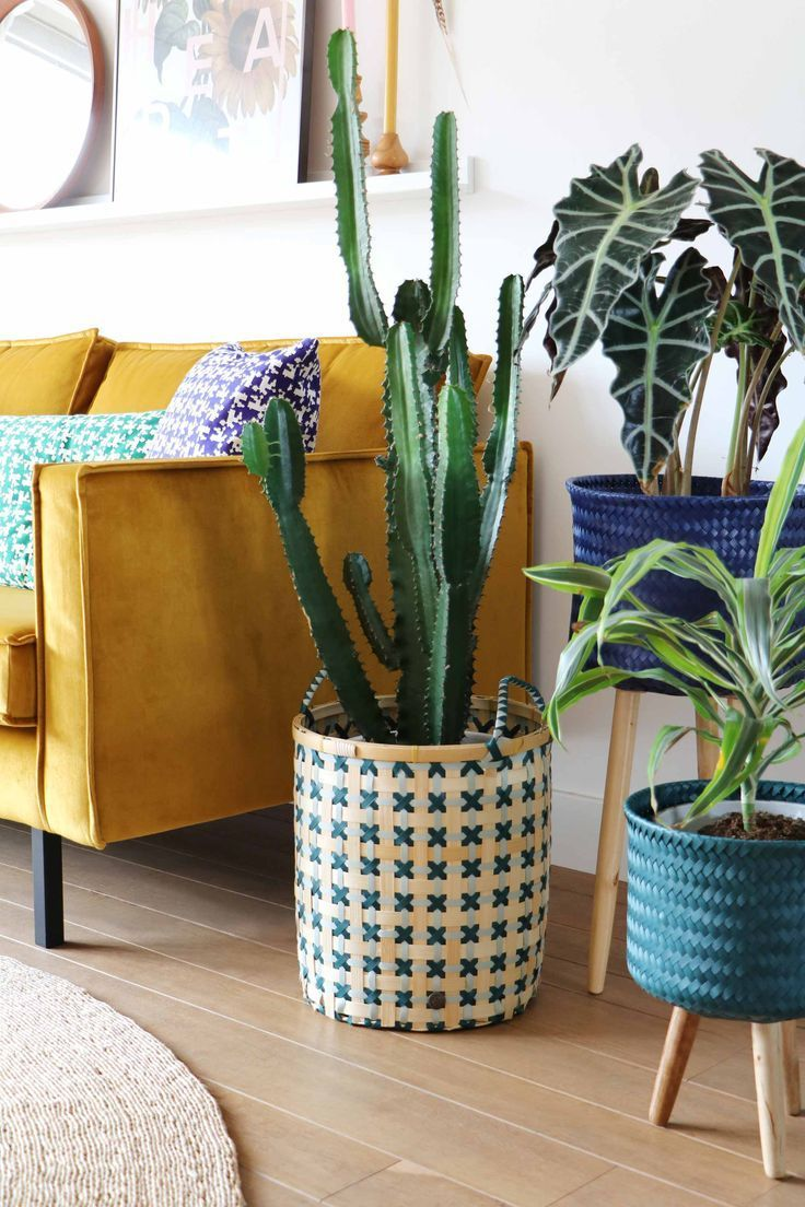 Plants in baskets! Such a pretty eclectic living space, gorgeous boho feel. Love hat mustard yellow sofa!