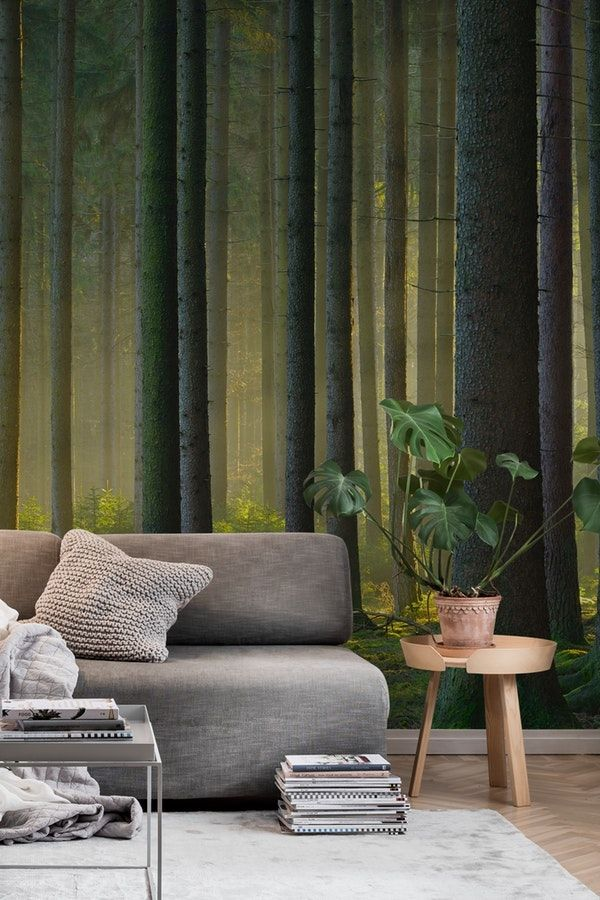 spruce forest wall mural forest wall murals pinterest wallspruce forest wall mural from happywall sunlight wallpapers happywall wallmural mural wallpaper forest sunbeams wallmurals trees spruce