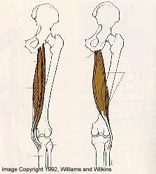 Nismat / Patients / Injury Evaluation & Treatment / Lower Body / Hamstring Pull (Strain)