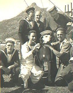 "Able Seaman Just Nuisance.  wearing a cap and jacket - going on parade with his friends ""Just Nuisance was the only dog ever to be officially enlisted in the Royal Navy. He was a Great Dane who from 1939-44 served at HMS Afrikander, a Royal Navy shore establishment in Simon's Town, South Africa. He died in 1944 and was buried with full military honours.""."