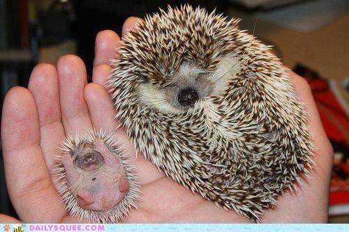 adorable... :)