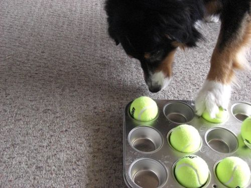 33 DIY Dog Toys from Things Around the House | BarkPost.... Some of these I'm not sure if I approve (I.e. giving your dog a jar lined with bacon grease...doesn't seem safe), but some are great! @Tammy Tarng Johnson Shadden