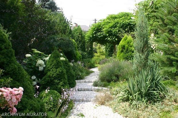 Ogród mamy w powijakach - gdybyś tak Św. Mikołaju przyniósł nam trochę roślin, drzewek, krzewów, albo dał na to środki finansowe... Roślinki będą u nas miały jak w raju... Już je kochamy!