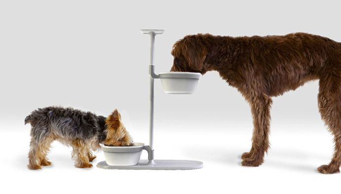 5 Quirky Dog Inventions So Cool, You'll Wish You Thought Them Up